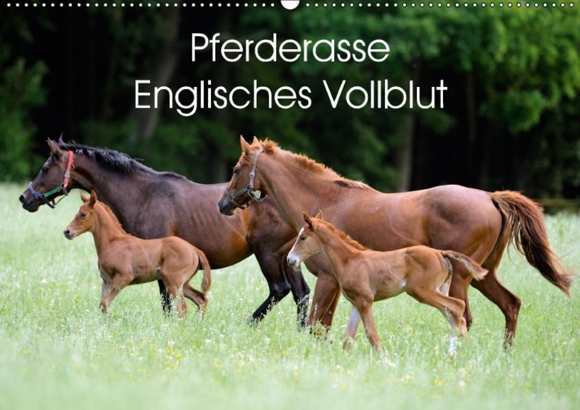 Pferderasse Englisches Vollblut (Wandkalender 2017 DIN A2 quer) - Coverbild