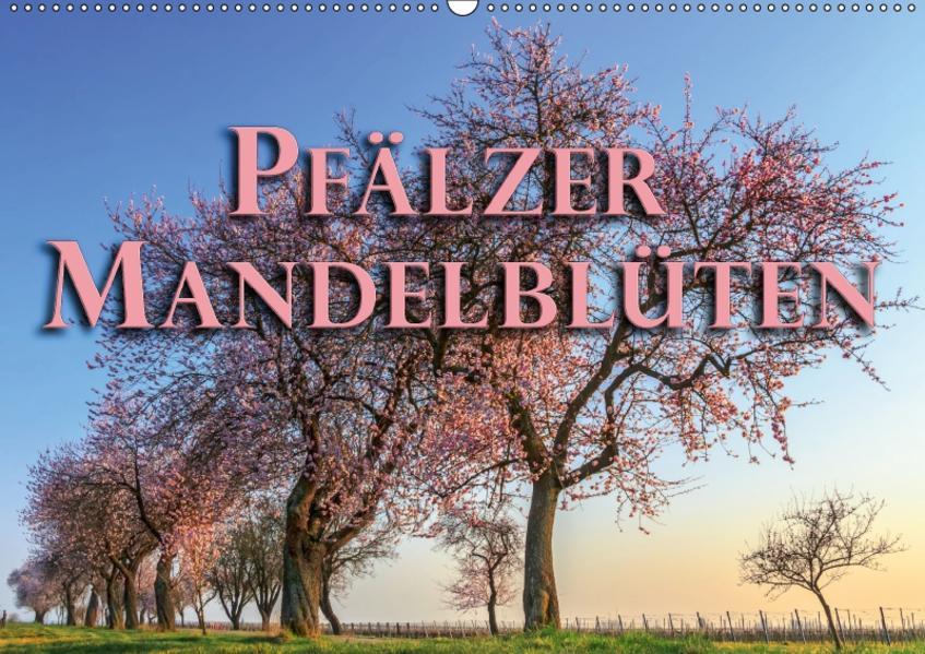 Pfälzer Mandelblüten (Wandkalender 2017 DIN A2 quer) - Coverbild