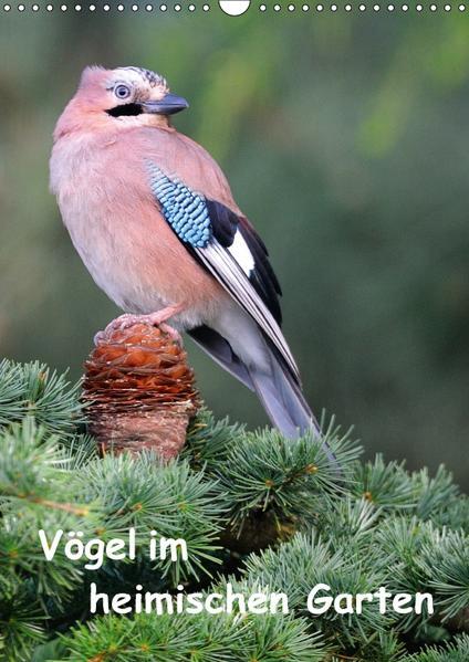 Vögel im heimischen Garten (Wandkalender 2017 DIN A3 hoch) - Coverbild