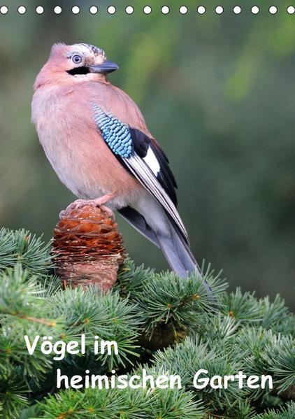 Vögel im heimischen Garten (Tischkalender 2017 DIN A5 hoch) - Coverbild
