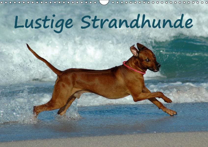 Lustige Strandhunde (Wandkalender 2017 DIN A3 quer) - Coverbild
