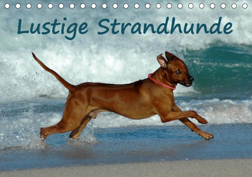 Lustige Strandhunde (Tischkalender 2017 DIN A5 quer) - Coverbild