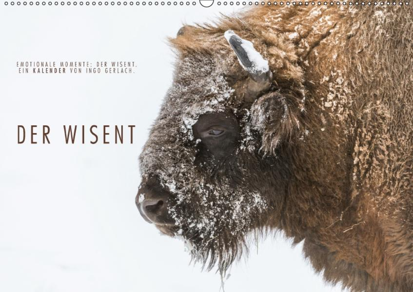 Emotionale Momente: Der Wisent. (Wandkalender 2017 DIN A2 quer) - Coverbild