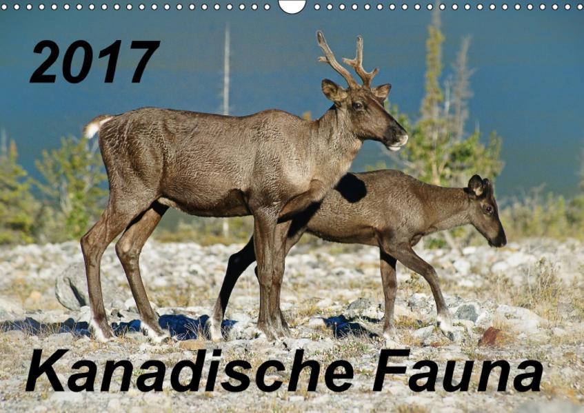 Kanadische Fauna  2017 (Wandkalender 2017 DIN A3 quer) - Coverbild