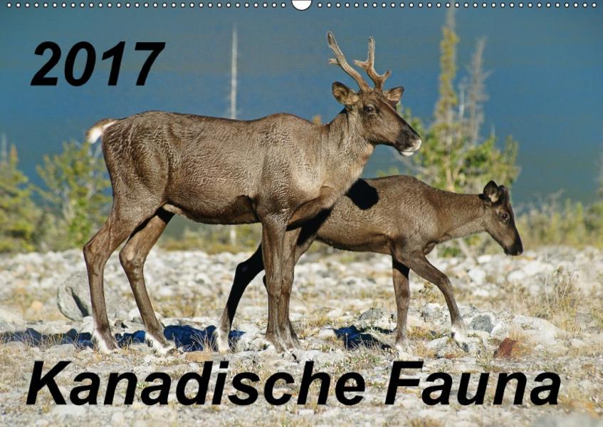 Kanadische Fauna  2017 (Wandkalender 2017 DIN A2 quer) - Coverbild