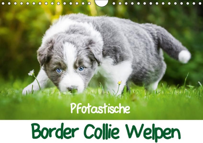 Pfotastische Border Collie Welpen (Wandkalender 2017 DIN A4 quer) - Coverbild