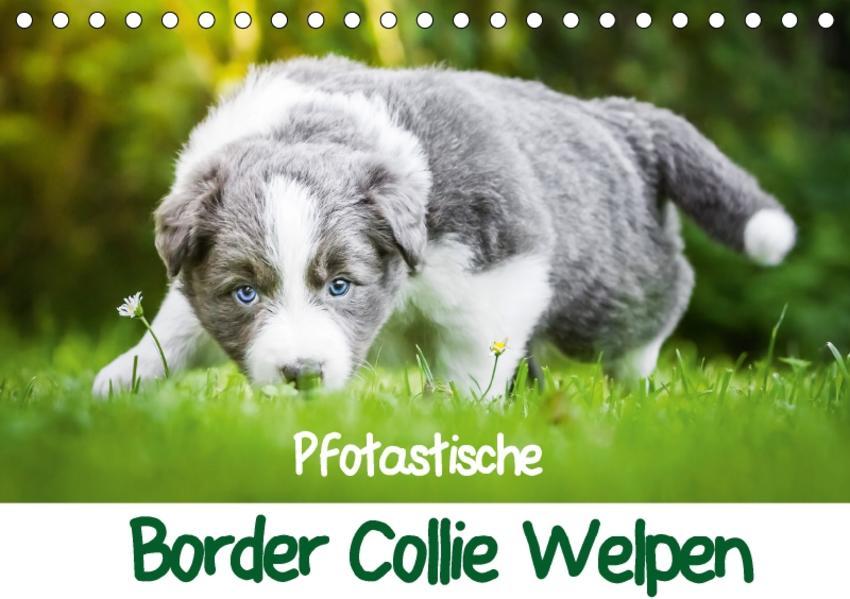 Pfotastische Border Collie Welpen (Tischkalender 2017 DIN A5 quer) - Coverbild