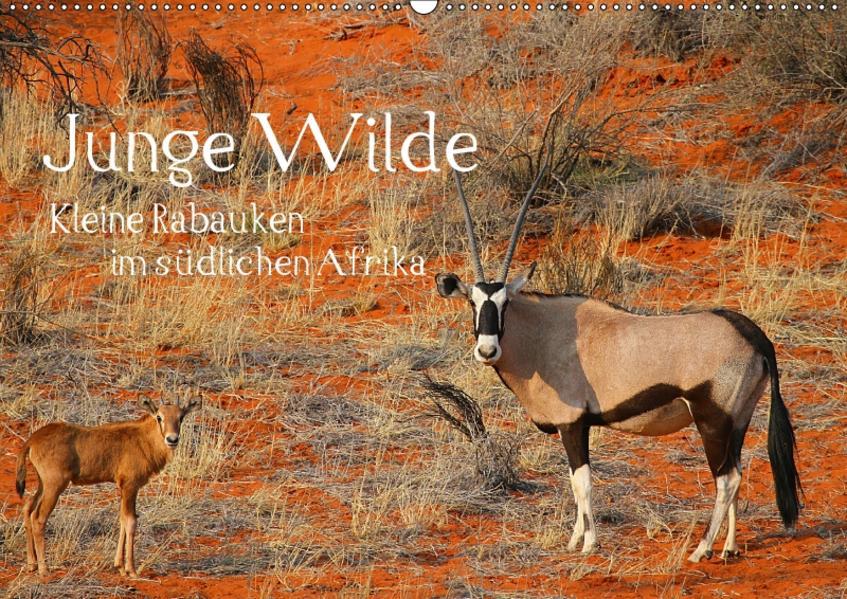 Junge Wilde - Kleine Rabauken im südlichen AfrikaCH-Version  (Wandkalender 2017 DIN A2 quer) - Coverbild
