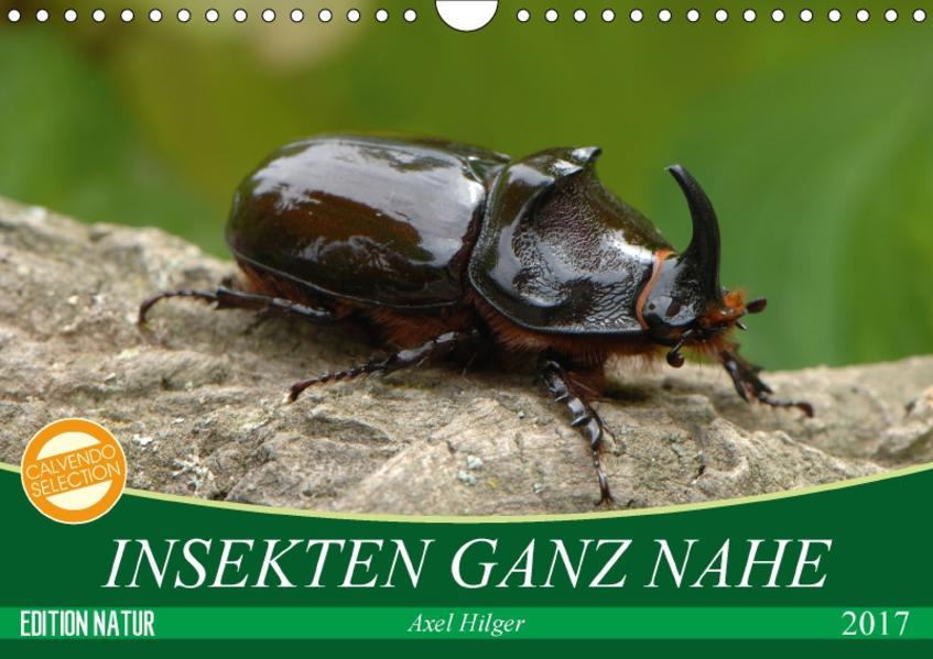 INSEKTEN GANZ NAHE (Wandkalender 2017 DIN A4 quer) - Coverbild