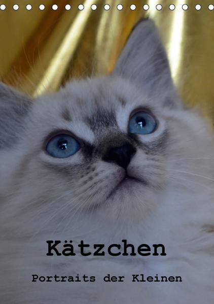 Kätzchen - Portraits der Kleinen (Tischkalender 2017 DIN A5 hoch) - Coverbild