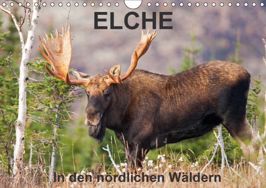 ELCHE In den nördlichen Wäldern (Wandkalender 2017 DIN A4 quer) - Coverbild