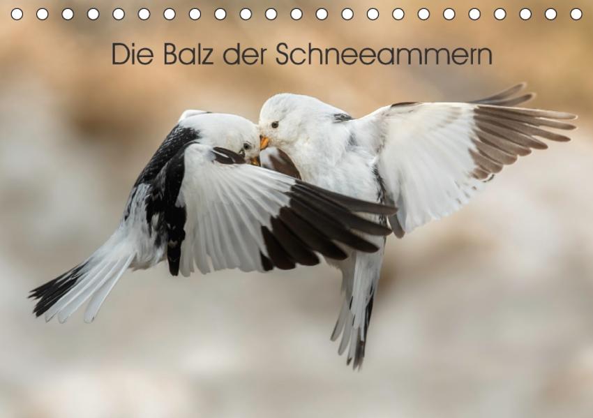 Die Balz der Schneeammern (Tischkalender 2017 DIN A5 quer) - Coverbild