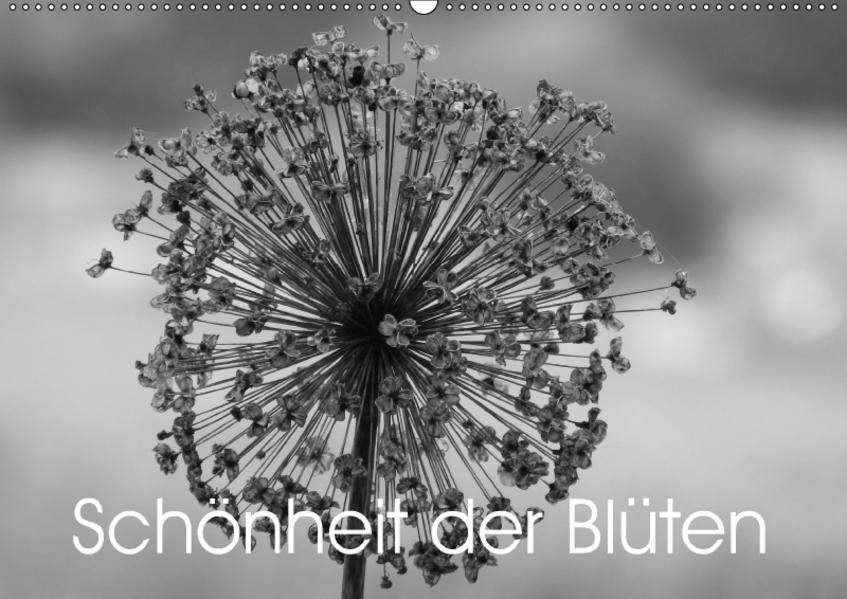 Schönheit der Blüten (Wandkalender 2017 DIN A2 quer) - Coverbild