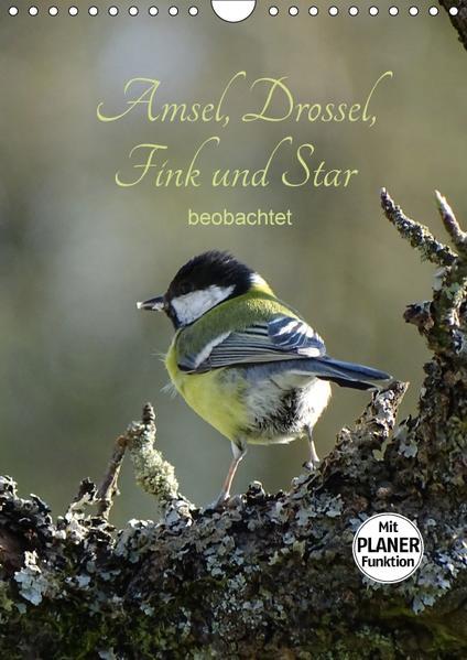 Amsel, Drossel, Fink und Star - beobachtet (Wandkalender 2017 DIN A4 hoch) - Coverbild