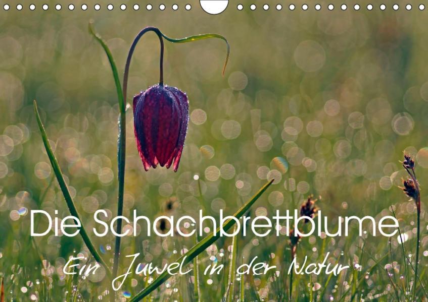 Die Schachbrettblume (Wandkalender 2017 DIN A4 quer) - Coverbild