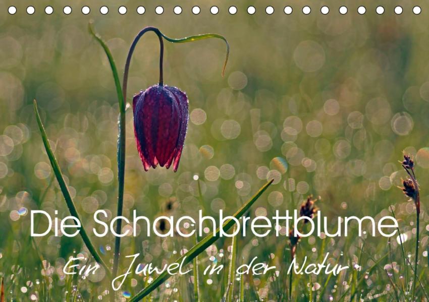 Die Schachbrettblume (Tischkalender 2017 DIN A5 quer) - Coverbild