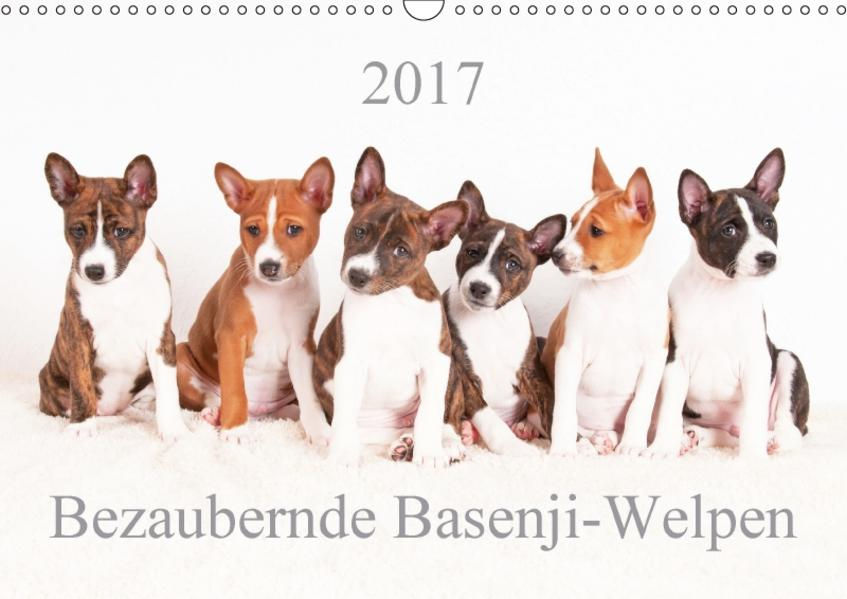 Bezaubernde Basenji-Welpen (Wandkalender 2017 DIN A3 quer) - Coverbild
