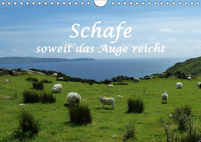 Schafe - soweit das Auge reicht (Wandkalender 2017 DIN A4 quer) - Coverbild