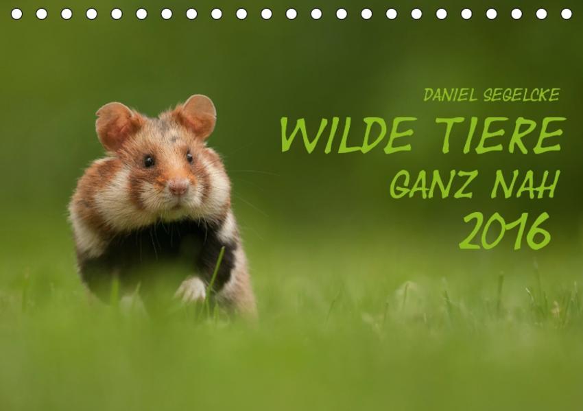 Wilde Tiere - Ganz nah (Tischkalender 2017 DIN A5 quer) - Coverbild