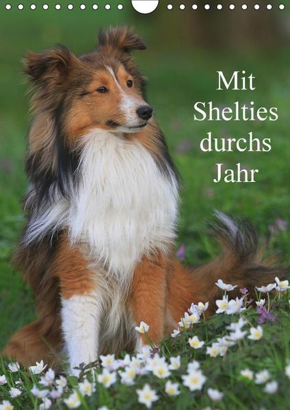 Mit Shelties durchs Jahr (Wandkalender 2017 DIN A4 hoch) - Coverbild