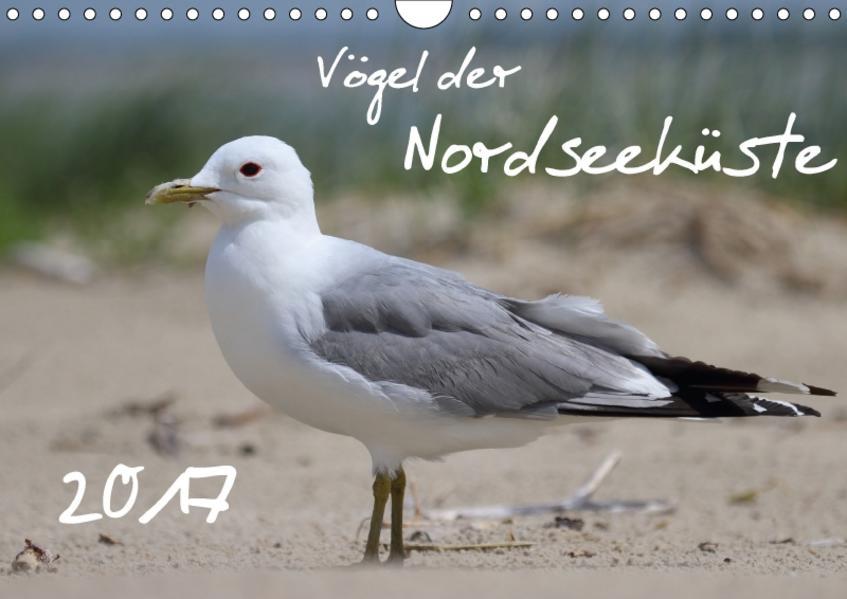 Vögel der Nordseeküste (Wandkalender 2017 DIN A4 quer) - Coverbild