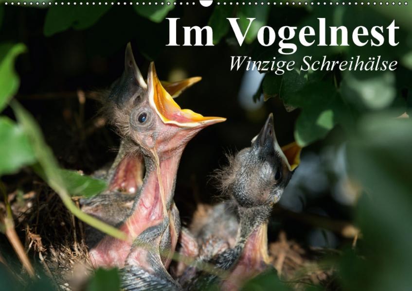 Im Vogelnest. Winzige Schreihälse (Wandkalender 2017 DIN A2 quer) - Coverbild