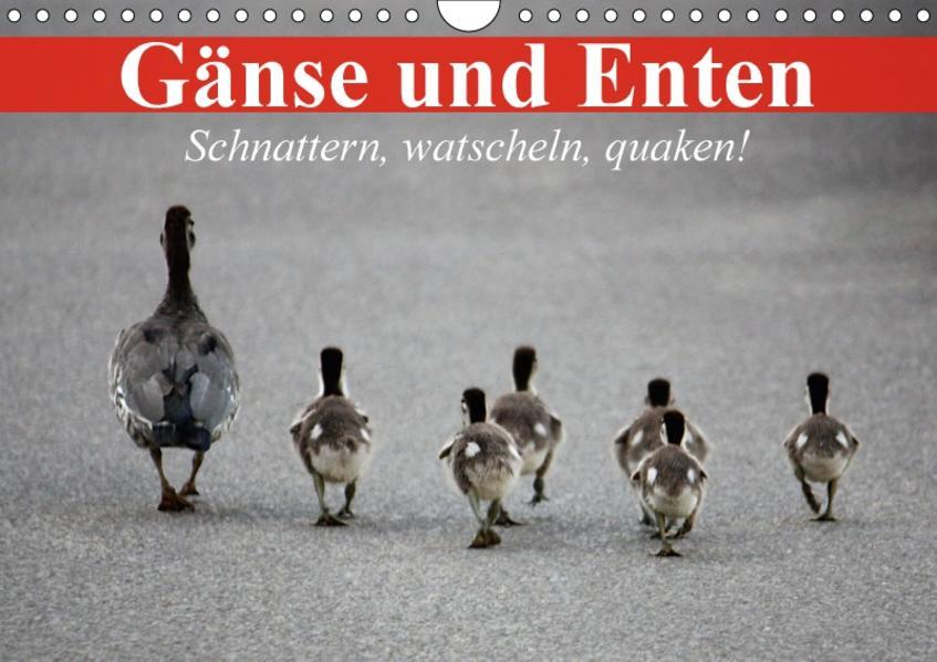 Gänse und Enten. Schnattern, watscheln, quaken! (Wandkalender 2017 DIN A4 quer) - Coverbild
