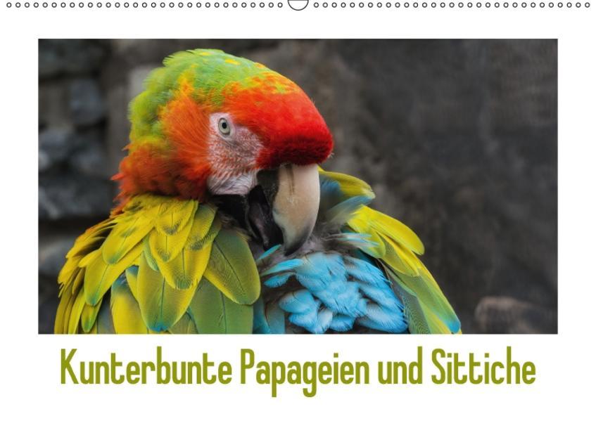 Kunterbunte Papageien und Sittiche (Wandkalender 2017 DIN A2 quer) - Coverbild