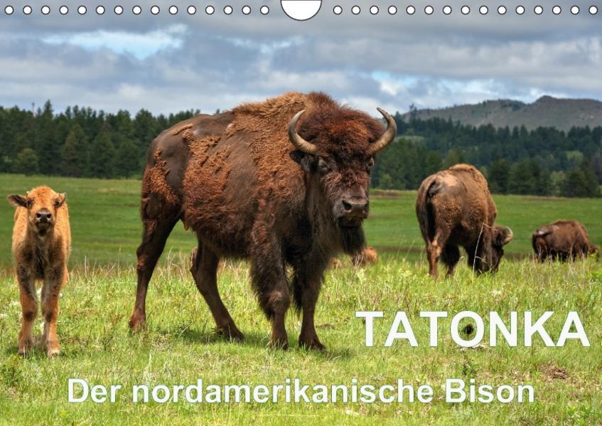 TATONKA Der nordamerikanische Bison (Wandkalender 2017 DIN A4 quer) - Coverbild