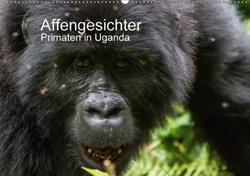 Affengesichter - Primaten in Uganda (Wandkalender 2017 DIN A2 quer) - Coverbild