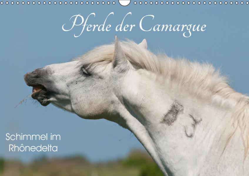 Pferde der Camargue – Schimmel im Rhônedelta (Wandkalender 2017 DIN A3 quer) - Coverbild