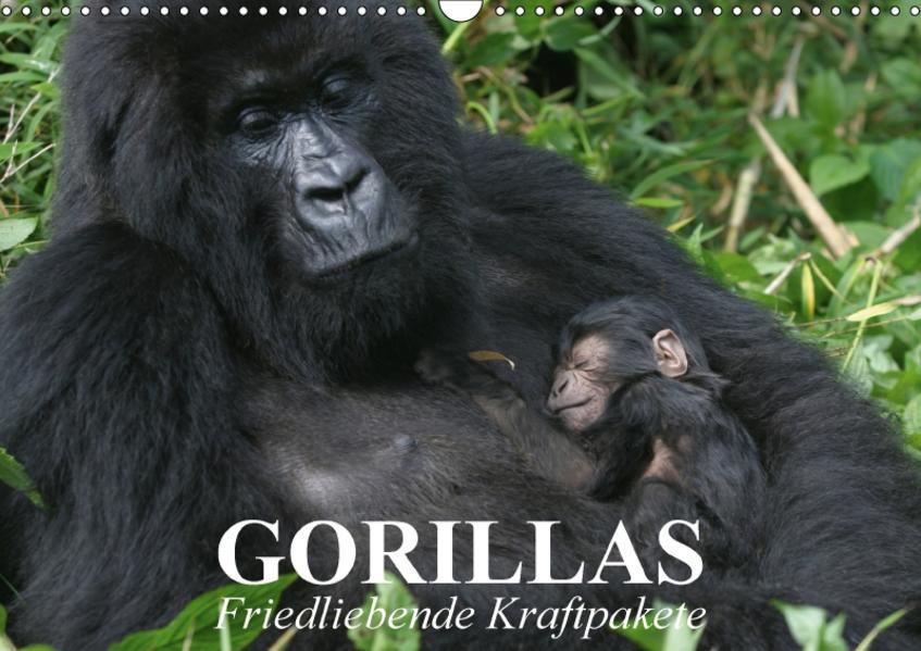 Gorillas. Friedliebende Kraftpakete (Wandkalender 2017 DIN A3 quer) - Coverbild
