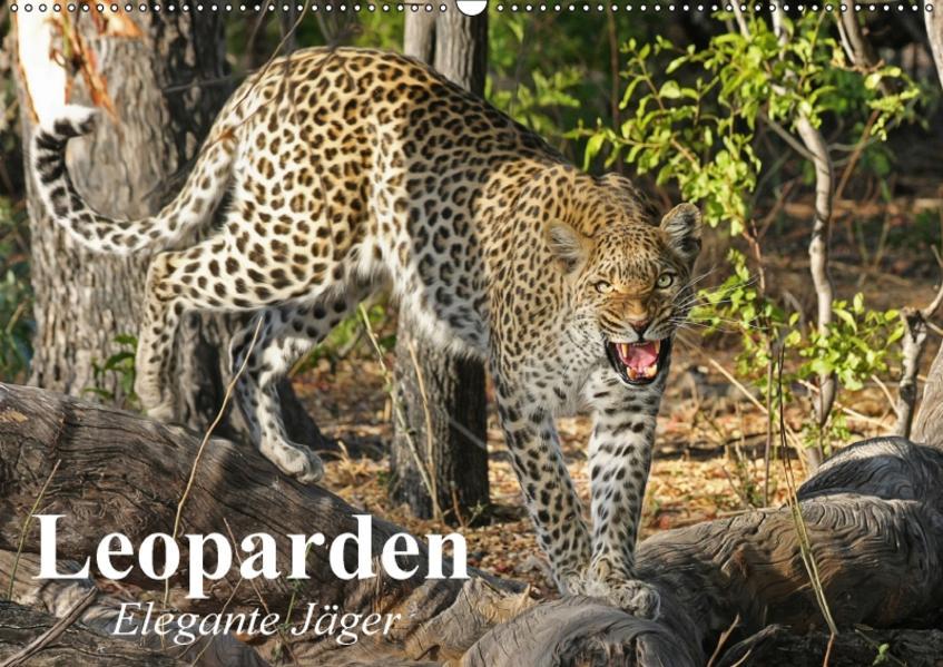 Leoparden. Elegante Jäger (Wandkalender 2017 DIN A2 quer) - Coverbild
