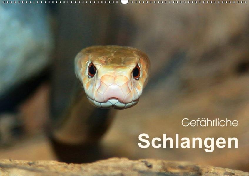 Gefährliche Schlangen (Wandkalender 2017 DIN A2 quer) - Coverbild