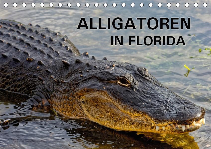 ALLIGATOREN in Florida (Tischkalender 2017 DIN A5 quer) - Coverbild