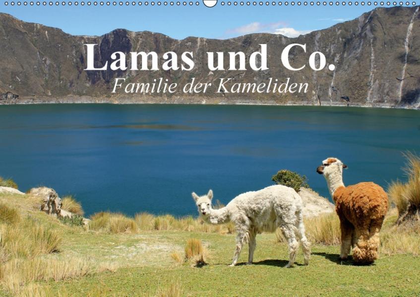 Lamas und Co. Familie der Kameliden (Wandkalender 2017 DIN A2 quer) - Coverbild