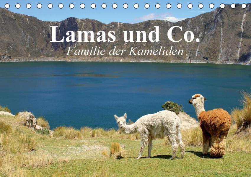 Lamas und Co. Familie der Kameliden (Tischkalender 2017 DIN A5 quer) - Coverbild