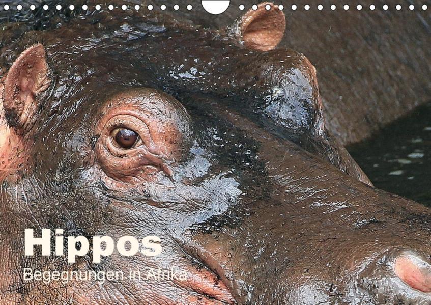 Hippos - Begegnungen in Afrika (Wandkalender 2017 DIN A4 quer) - Coverbild