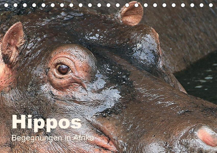 Hippos - Begegnungen in Afrika (Tischkalender 2017 DIN A5 quer) - Coverbild