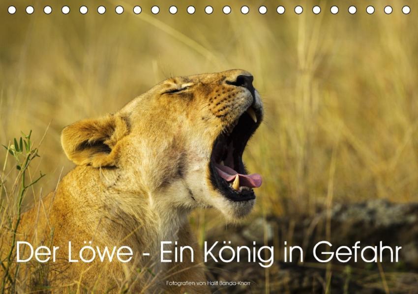 Der Löwe - Ein König in Gefahr (Tischkalender 2017 DIN A5 quer) - Coverbild