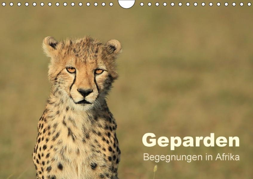 Geparden - Begegnungen in Afrika (Wandkalender 2017 DIN A4 quer) - Coverbild