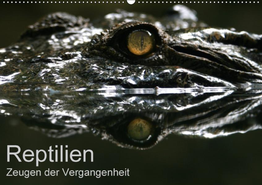 Reptilien - Zeugen der Vergangenheit (Wandkalender 2017 DIN A2 quer) - Coverbild