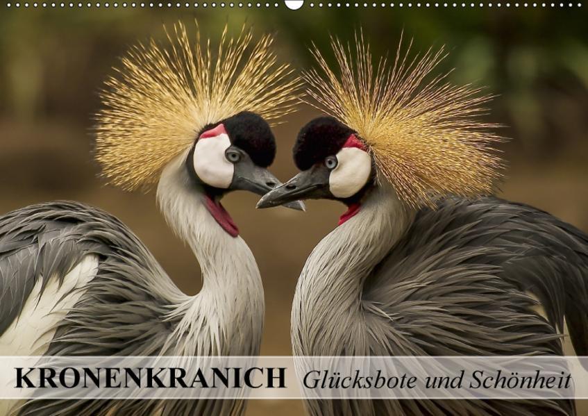Kronenkranich. Glücksbote und Schönheit (Wandkalender 2017 DIN A2 quer) - Coverbild