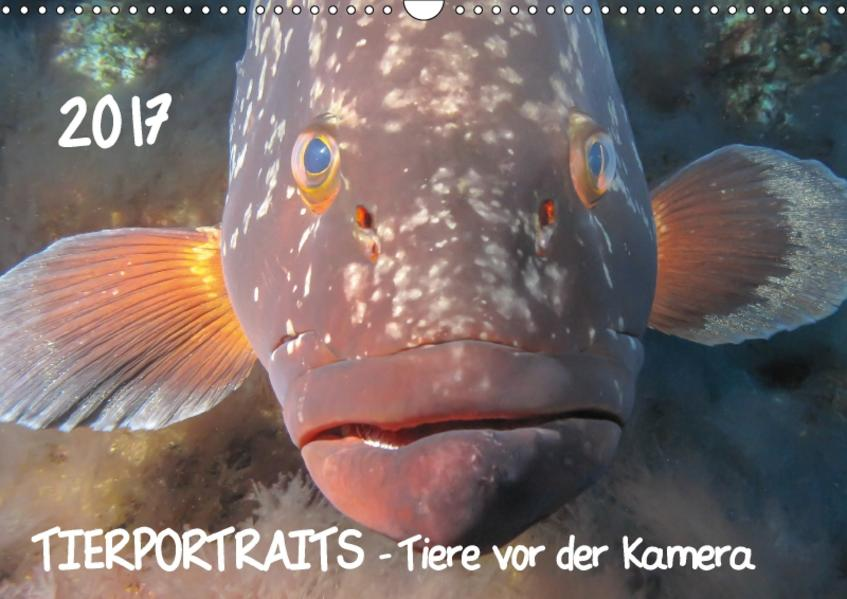 TIERPORTRAITS - Tiere vor der Kamera (Wandkalender 2017 DIN A3 quer) - Coverbild