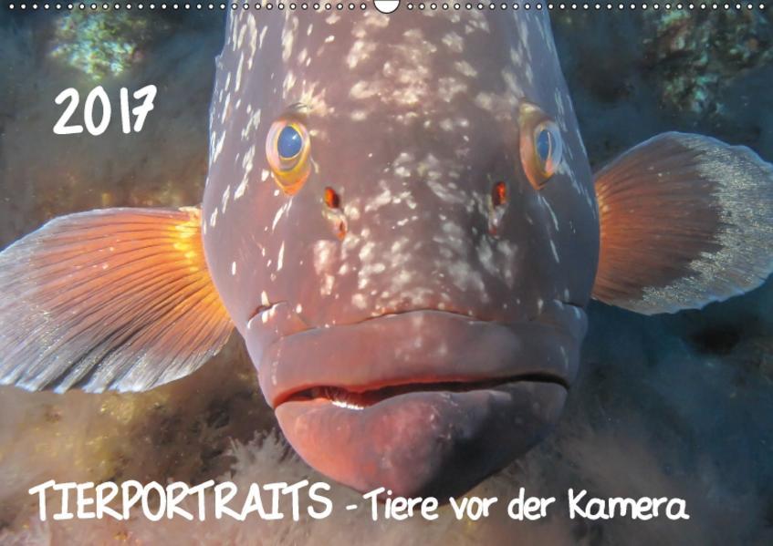 TIERPORTRAITS - Tiere vor der Kamera (Wandkalender 2017 DIN A2 quer) - Coverbild