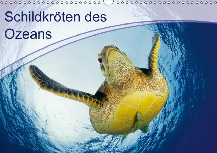 Schildkröten des Ozeans (Wandkalender 2017 DIN A3 quer) - Coverbild