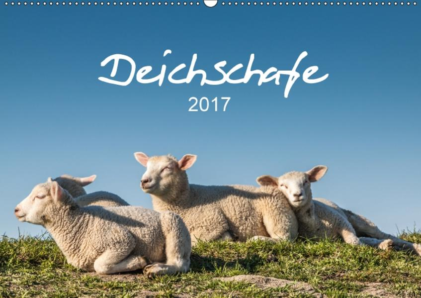 Deichschafe (Wandkalender 2017 DIN A2 quer) - Coverbild