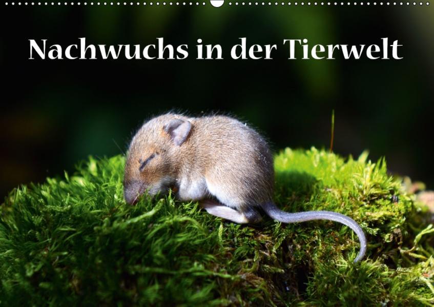 Nachwuchs in der Tierwelt (Wandkalender 2017 DIN A2 quer) - Coverbild