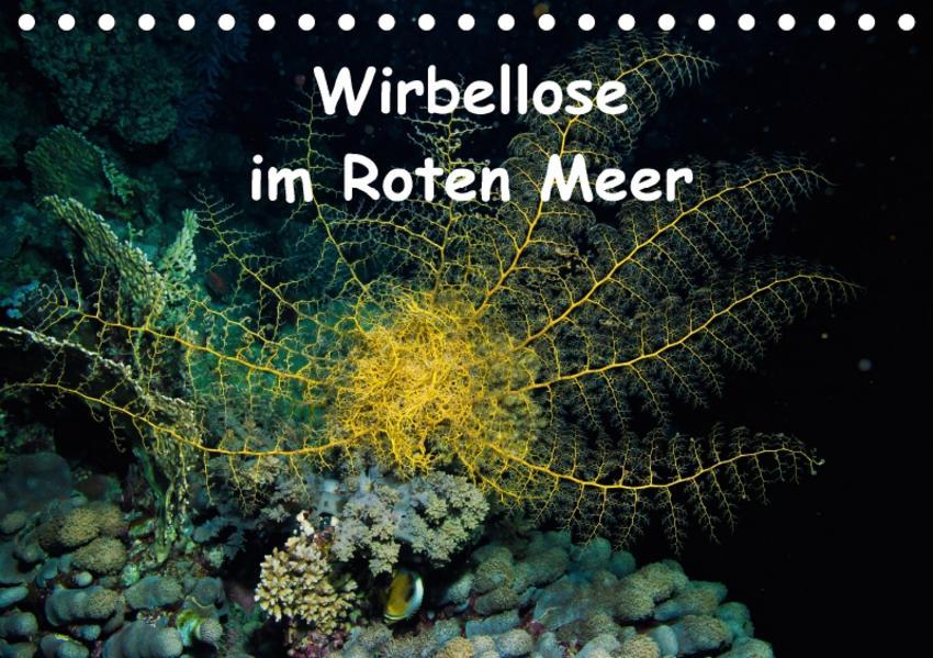Wirbellose im Roten Meer (Tischkalender 2017 DIN A5 quer) - Coverbild