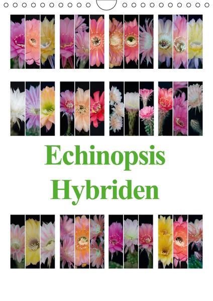 Echinopsis Hybriden (Wandkalender 2017 DIN A4 hoch) - Coverbild